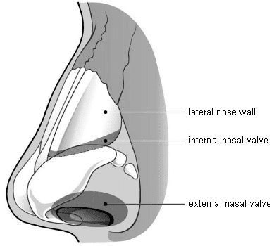 Nose diagram showing the lateral nose wall, internal nose valve and external nasal valve